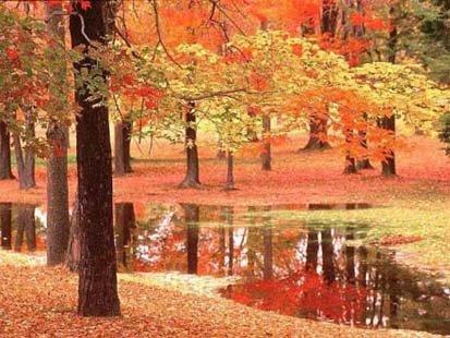 automneblog.jpg